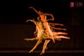 Paria - premieră absolută de dans contemporan, coregrafia Joshua Legge